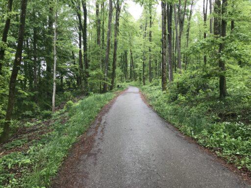 Frisch-grüne Wälder