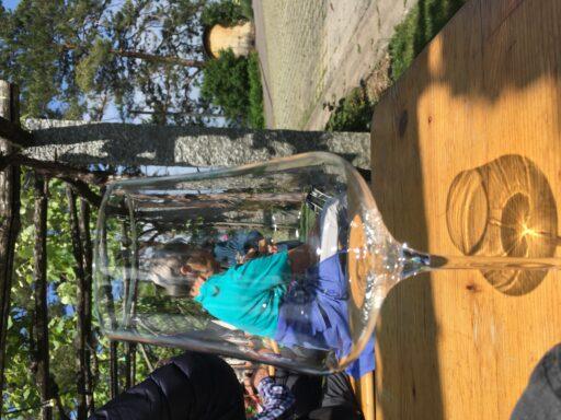 Lily im Glas | Foto Romy