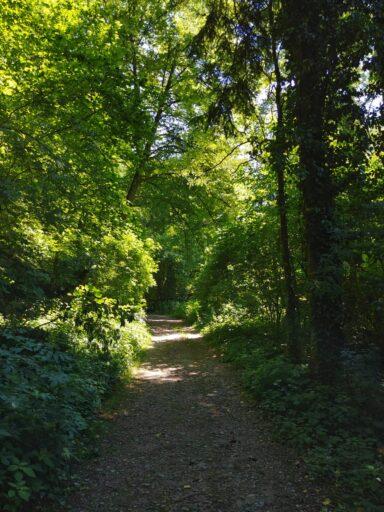 Zwischen Flaach und Berg am Irchel Foto Meinrad