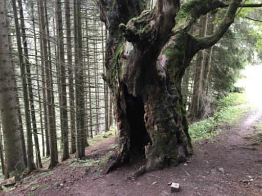 Dieser Baum könnte sicher viel erzählen