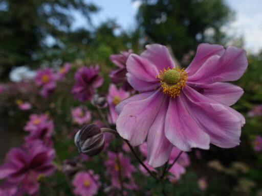 Im Jardin instictiv