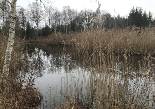 Amriswil - Hudelmoos - Muolen _ 031