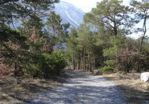 Leuk - Pfynwald - Sierre