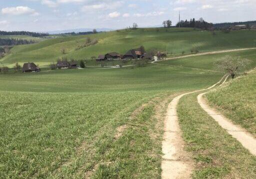 Huttwil - Studerwäldli - Huttwil_39