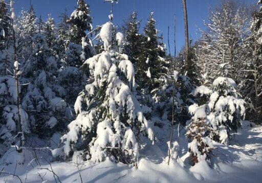 Wunderbarer Winterwald